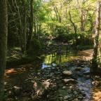 Lockdown Adventures to Hamsterley Forest